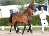 azteca-foal