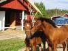 HEST-OG-BRaTEN-2002-070