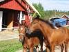 HEST-OG-BRaTEN-2002-071