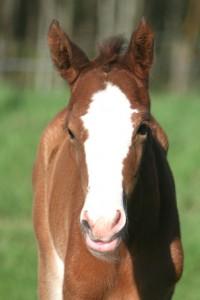 foal-i