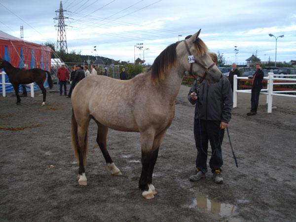 Maiavår (e.Lome Elden u.Maia Mollyb e.Atom Vinter) og Fred på Derbyauksjon 2009