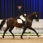 Seier til Lionheart under Artic Equestrian Games 2009 - Foto: Ridehesten