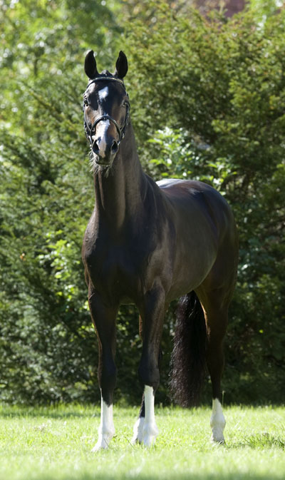 Sancisco (e.Sandro Hit - Rohdiamant)