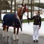 Trude Hestengen har kjøpt avlshingsten Tobajo Pik Disney