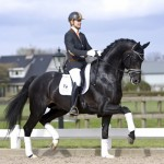 President's Jack Sparrow and Edward Gal. Foto: Tillatelse fra President Dressage Stables