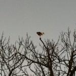 Storken er et kjennetegn på Flyinge