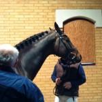 Corino Vdl på veterinærbesiktigelse