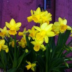 Våren har kommet
