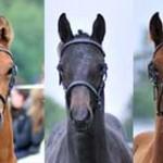 foal-2011